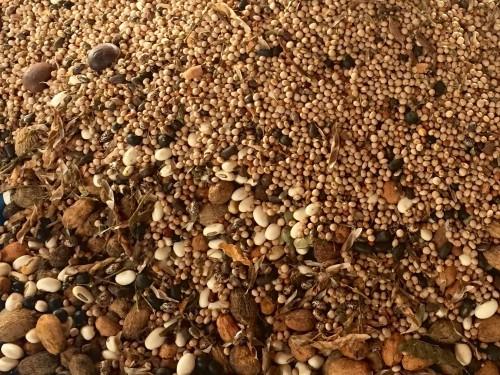 Muvuca de sementes